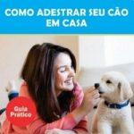 Como adestrar seu cão em casa com o Guia prático de Barbara Bruna Dias