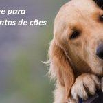 E-book Curso de Adestramento Seguro para cães
