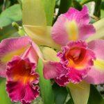 Passo a passo para Cultivar Orquídeas Corretamente em Casas e Apartamentos