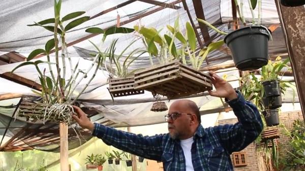 Curso Online para Cultivar Orquídeas com Alberto Schuman